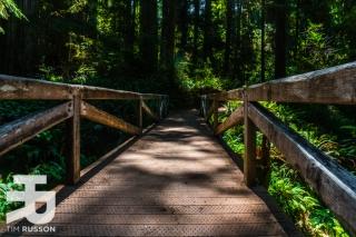 Tim-Russon-Redwoods-11