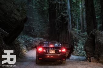 Tim-Russon-Redwoods-16